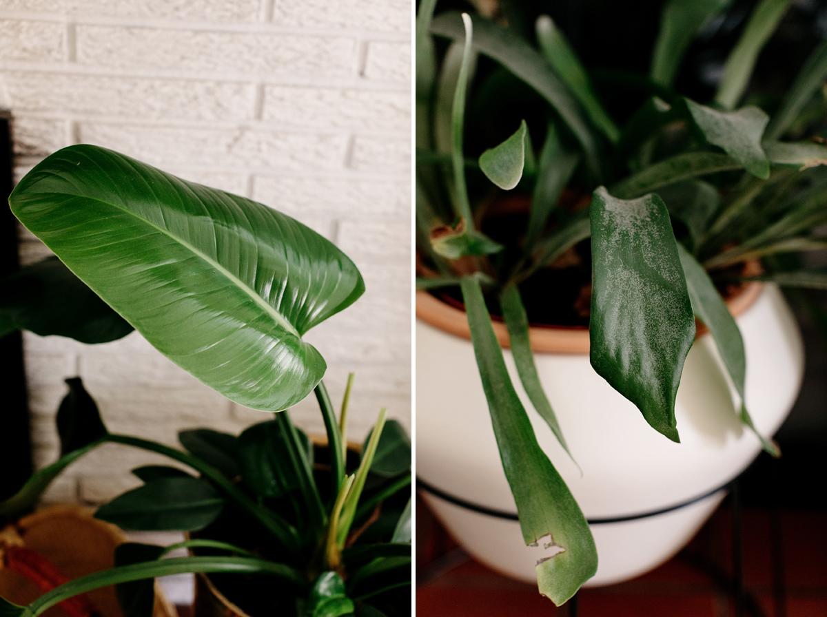 017-plant--plant-addict--blogger--interior-blogger--interio--home-blogger--lifestyle--lifestlye-blogger--tropical--urban-jungle.jpg