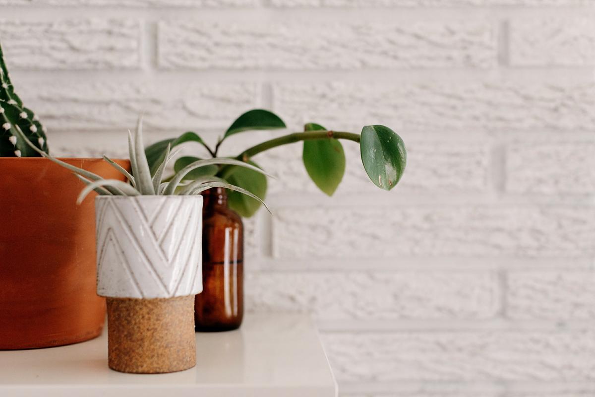 019-plant--plant-addict--blogger--interior-blogger--interio--home-blogger--lifestyle--lifestlye-blogger--tropical--urban-jungle.jpg