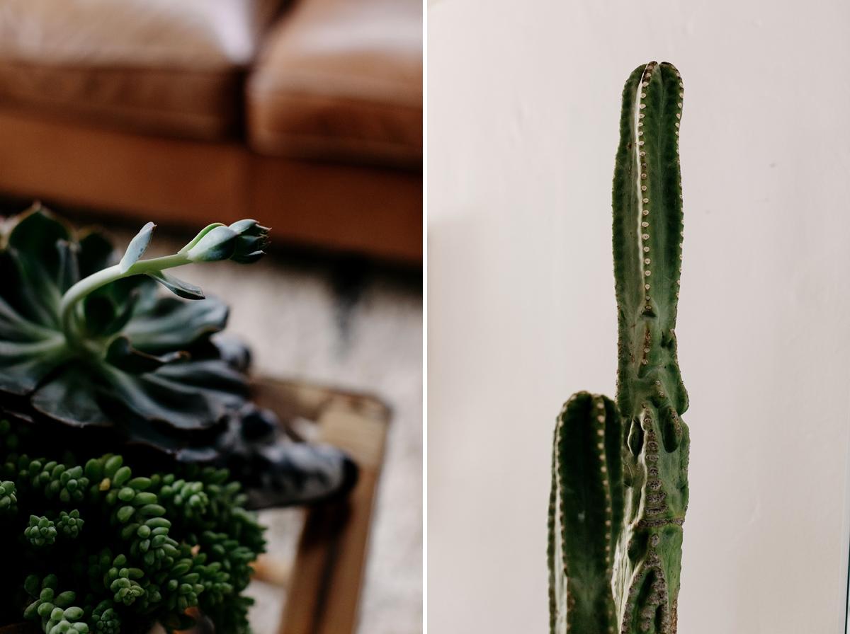 022-plant--plant-addict--blogger--interior-blogger--interio--home-blogger--lifestyle--lifestlye-blogger--tropical--urban-jungle.jpg