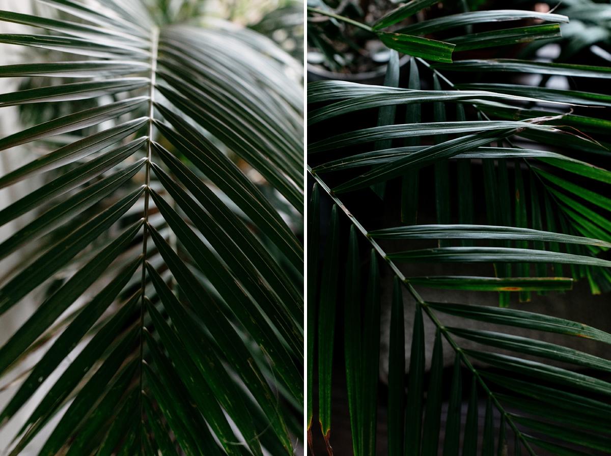 023-plant--plant-addict--blogger--interior-blogger--interio--home-blogger--lifestyle--lifestlye-blogger--tropical--urban-jungle.jpg