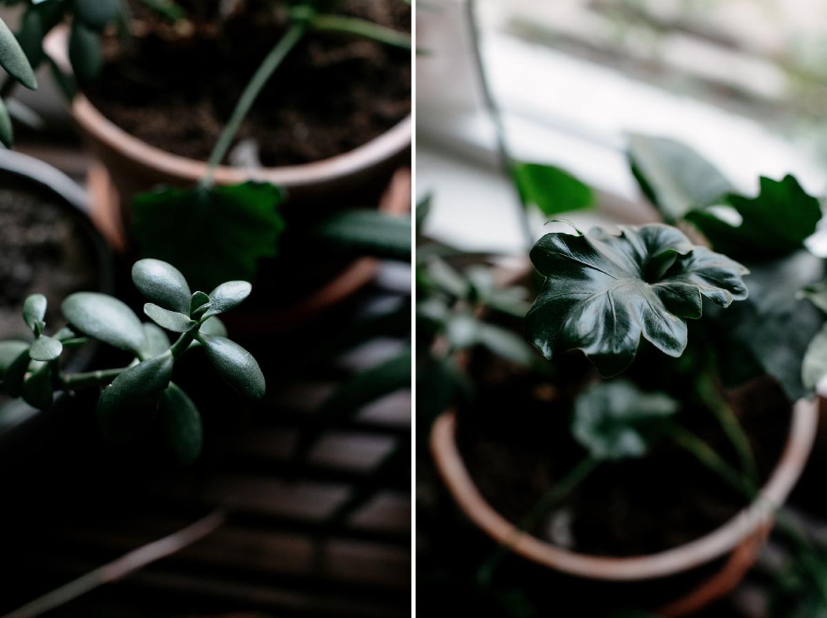 025-plant--plant-addict--blogger--interior-blogger--interio--home-blogger--lifestyle--lifestlye-blogger--tropical--urban-jungle.jpg
