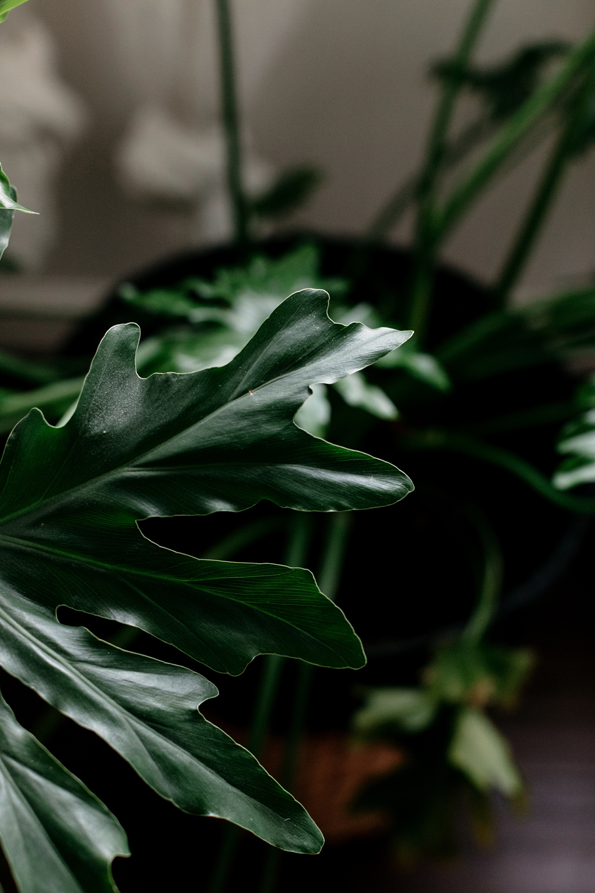 027-plant--plant-addict--blogger--interior-blogger--interio--home-blogger--lifestyle--lifestlye-blogger--tropical--urban-jungle.jpg