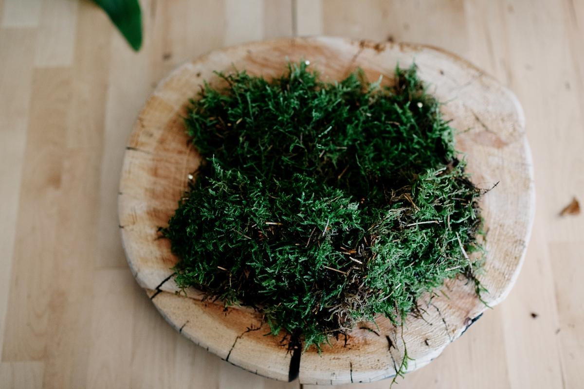 006-staghorn--mounting-a-staghorn--diy--lifestle-blog--interior-design-blog--plant--green-thumb.jpg