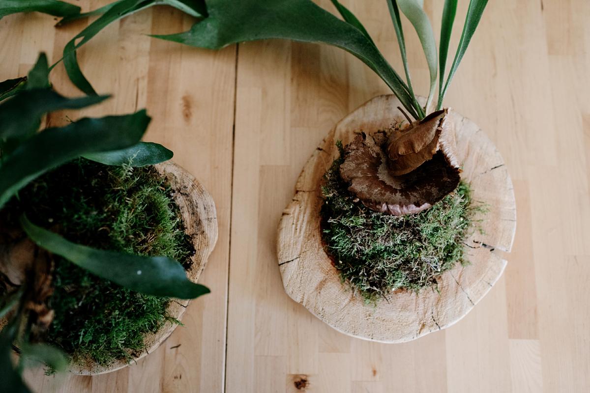 013-staghorn--mounting-a-staghorn--diy--lifestle-blog--interior-design-blog--plant--green-thumb.jpg