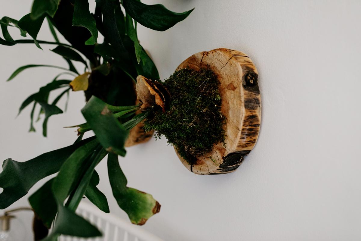 016-staghorn--mounting-a-staghorn--diy--lifestle-blog--interior-design-blog--plant--green-thumb.jpg