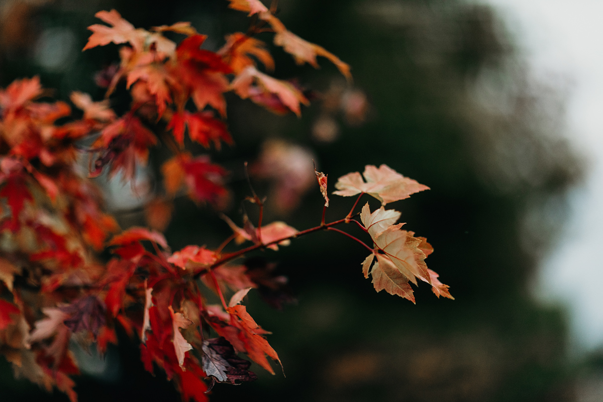 001-autumn--fall--red-leaves--lifestlye-blog.jpg