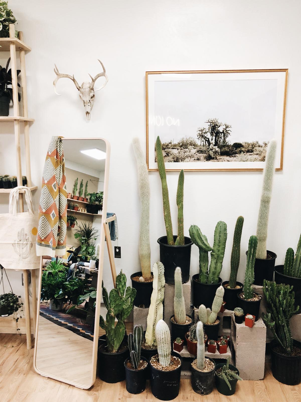 003-plant-shop--no-longer-wander--plants--albuquerque--plant-store.jpg