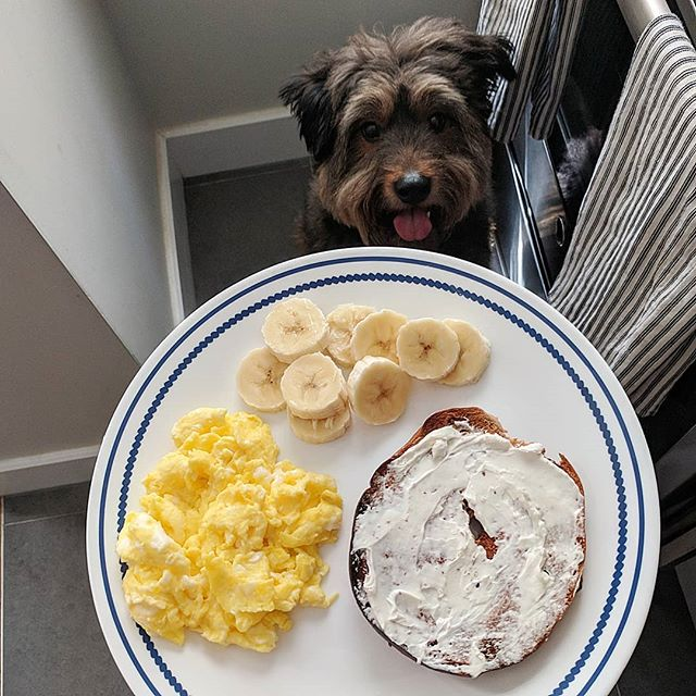 Today's #SaturdayBagels spread includes half a cinnamon raisin toasted with cream cheese, 2 scrambled eggs and a banana. Even Oscar wants a bite 🤤