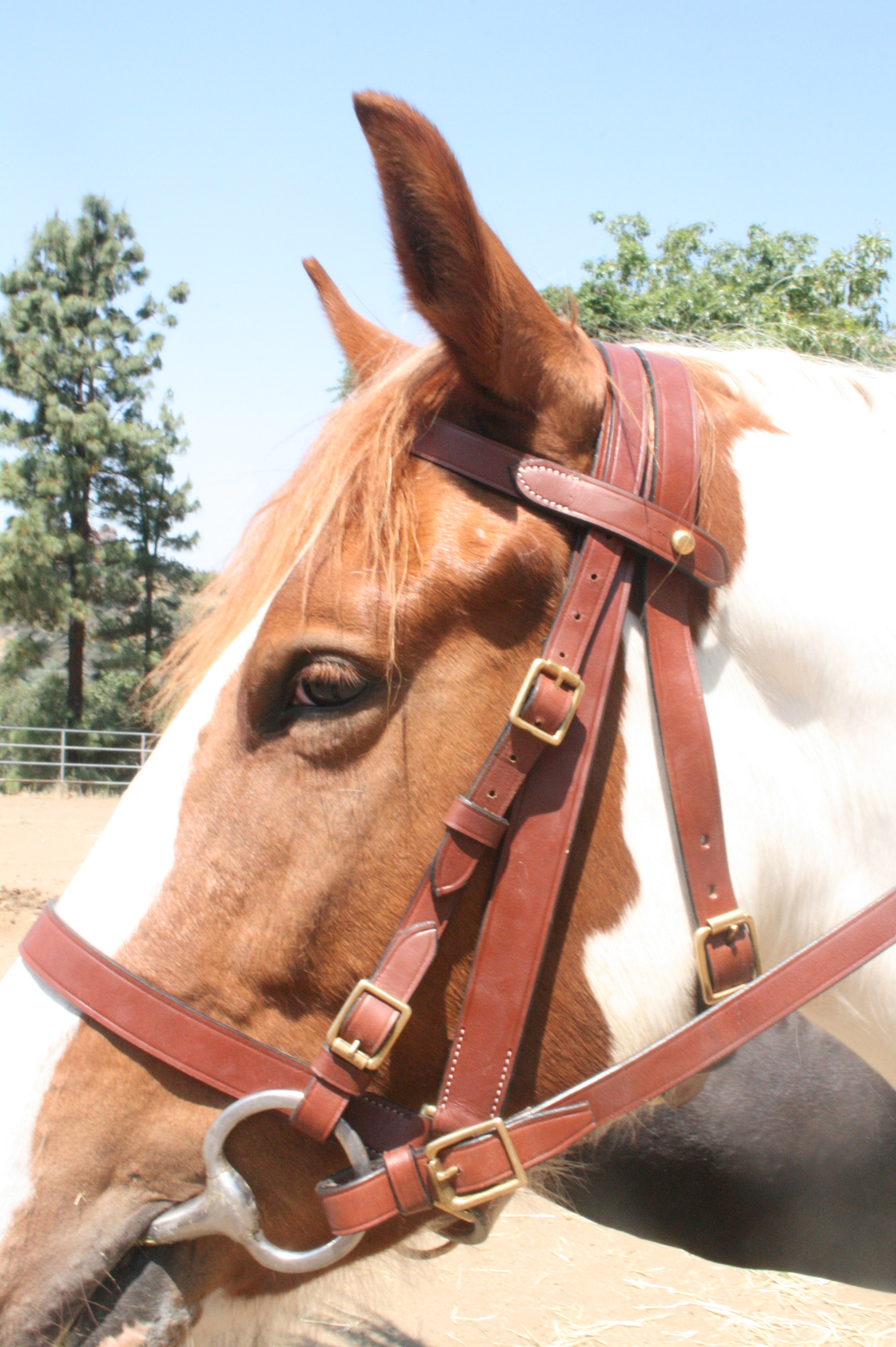 The Military Halter Bridle. Comes as shown. Price $169