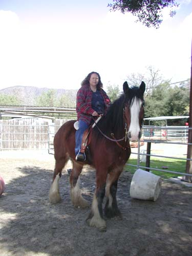 """THIS IS CAROLYN BERRY, WITH HER 2,000lb HORSE 'GAVIN' FITTED WITH A FLEECE-LINED WOOD/STEEL/TREE SADDLE MADE BY COLIN. SHE SAYS """"WE LOVE IT.""""  SAYS COLIN: """"IF IT HAS FOUR LEGS AND MAKES HORSE NOISES, I CAN FIT IT !!!"""""""