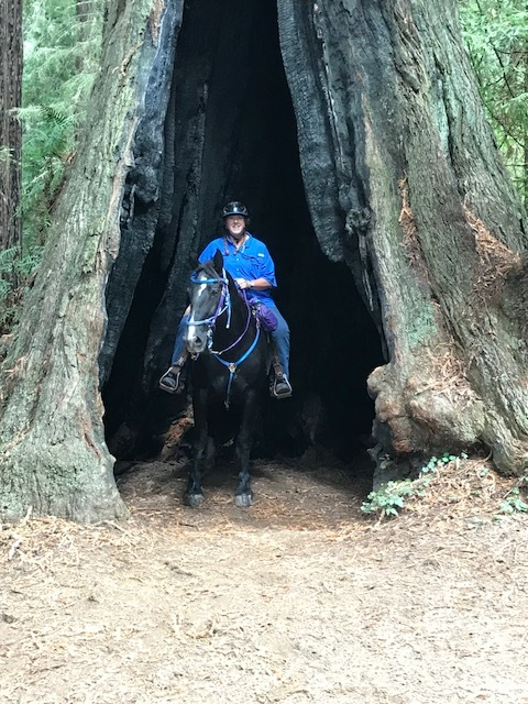 Amy in the redwoods in California