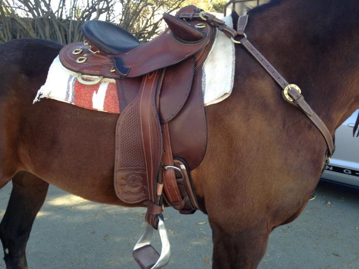 Colin Dangaard Australian saddle