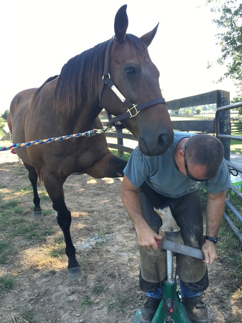 Jody working on one of the horses that played in the movie Sea Biscuit - his name is Popcorn Delight