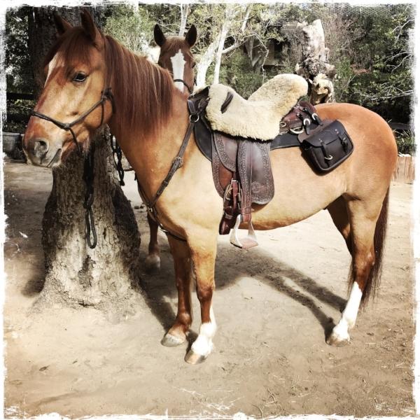 BBGee under saddle