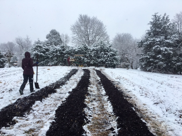 Spreading compost in the snow