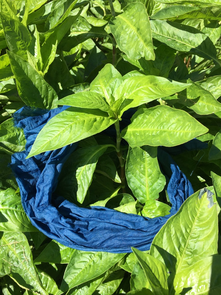 Graham Keegan Persicaria Tinctoria draped in indigo cloth.jpg