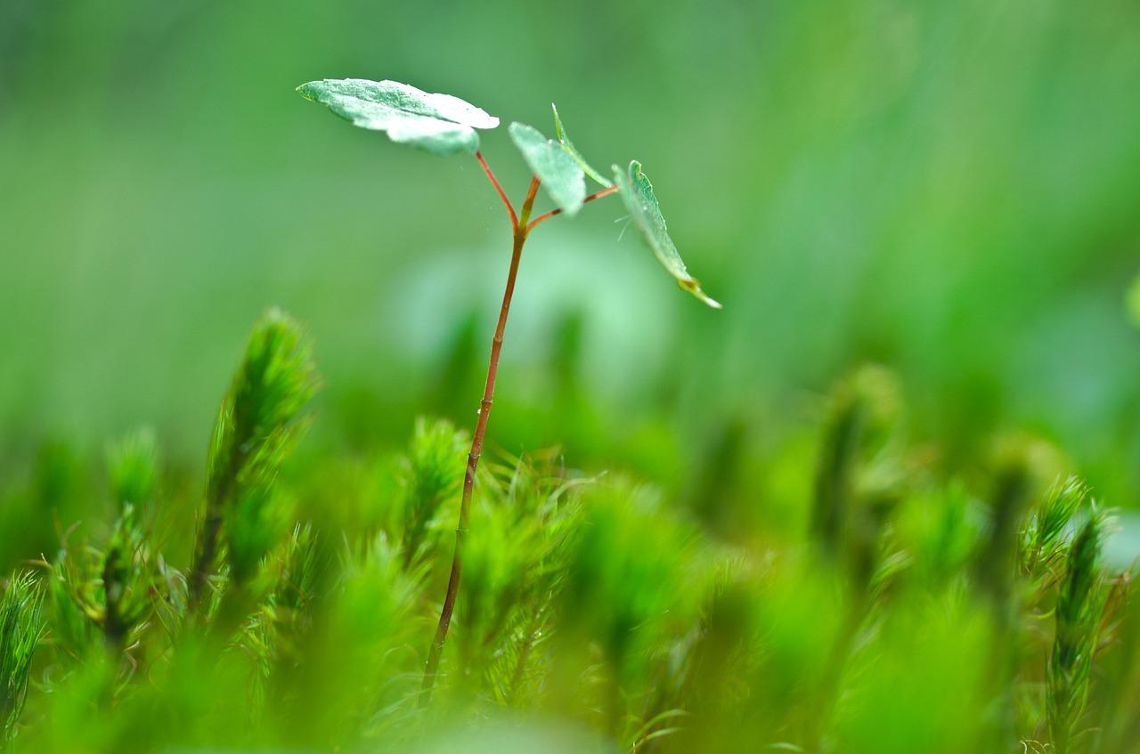 Forest_Pixabay.jpg