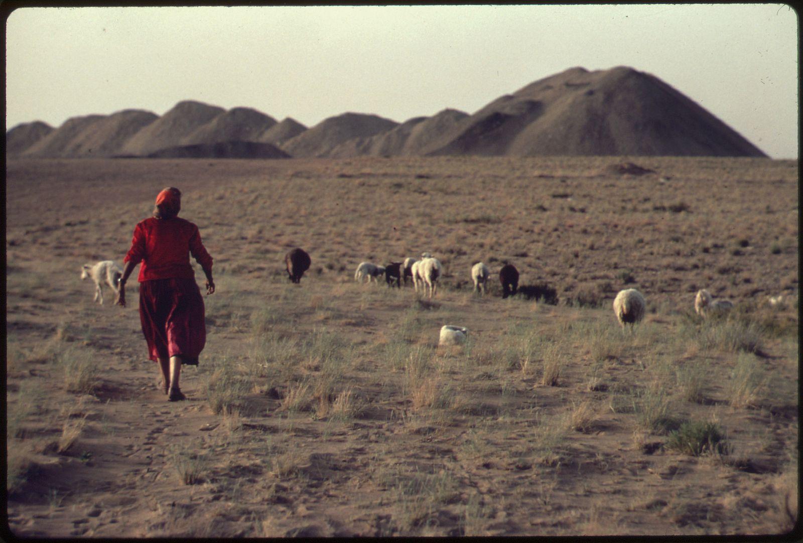Navajo_Sheepherder_WikimediaCommons.jpg