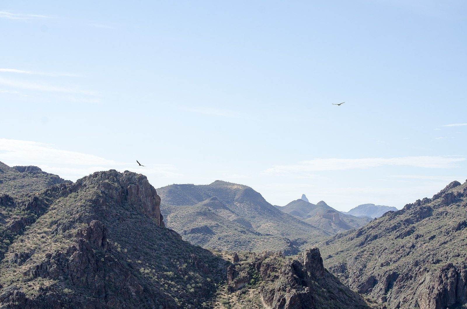 1600px-Eastern_View_from_Mt_Pinter,_Tonto_National_Forest,_Arizona_-_panoramio_(1).jpg