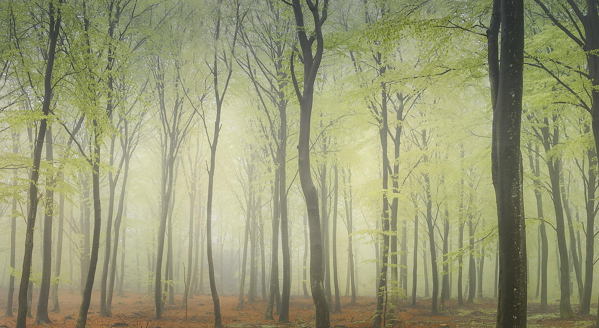 Bokskog på Österlen i april