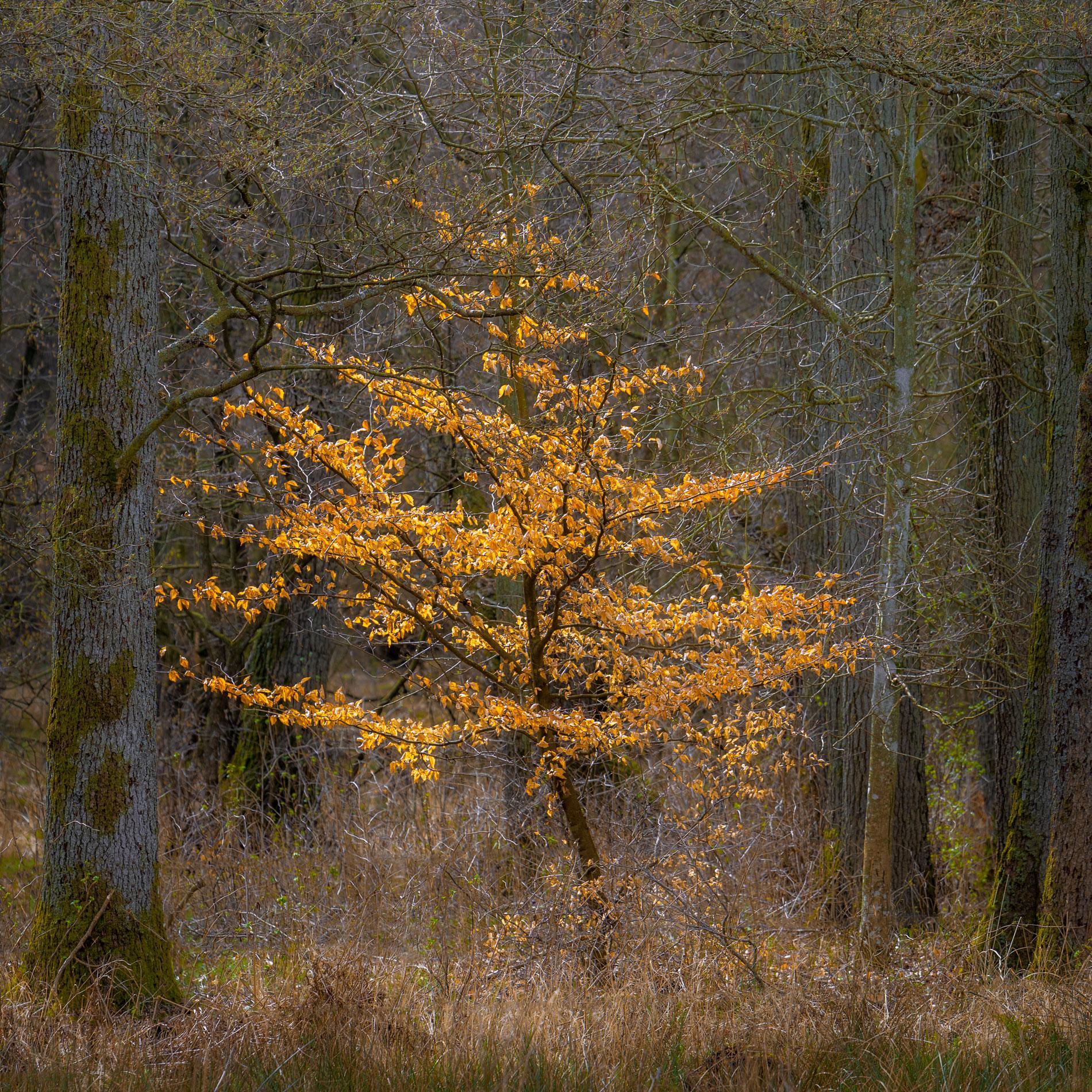 Träd/Trees