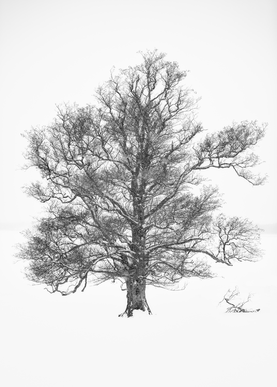 Whiteout (Exempelstorlek print 40x30 cm. 3500 SEK exkl. passepartout, ram och glas) 1/10
