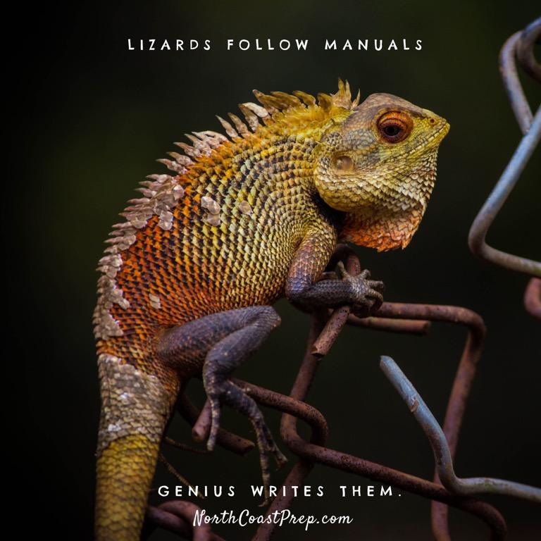 Lizard Book39.jpg