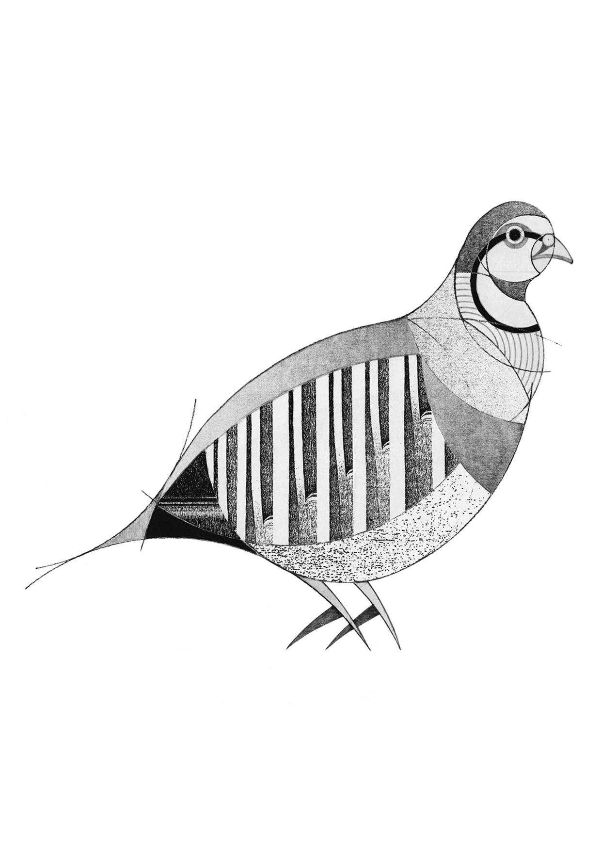 partridge (2013)