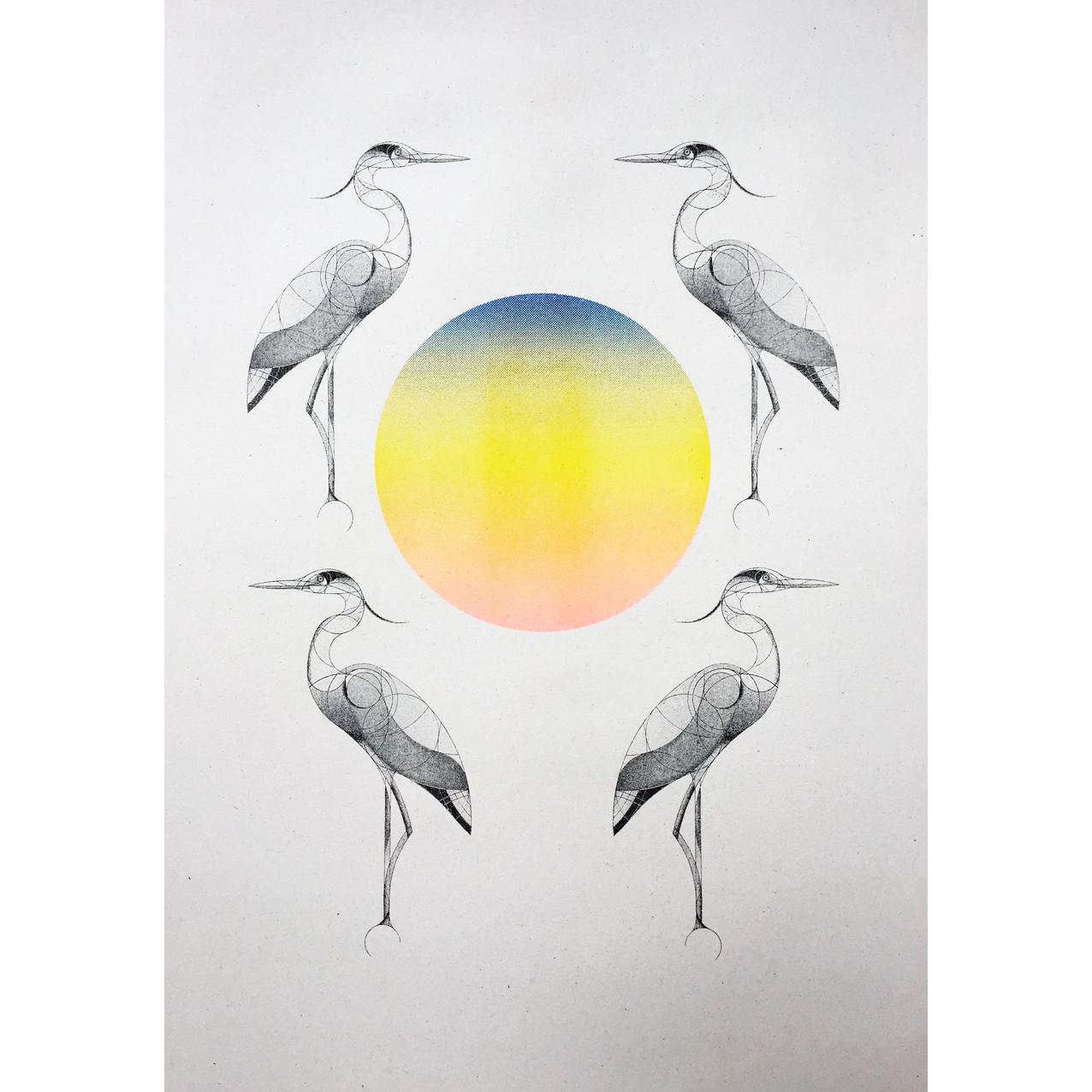 herons at dawn & dusk