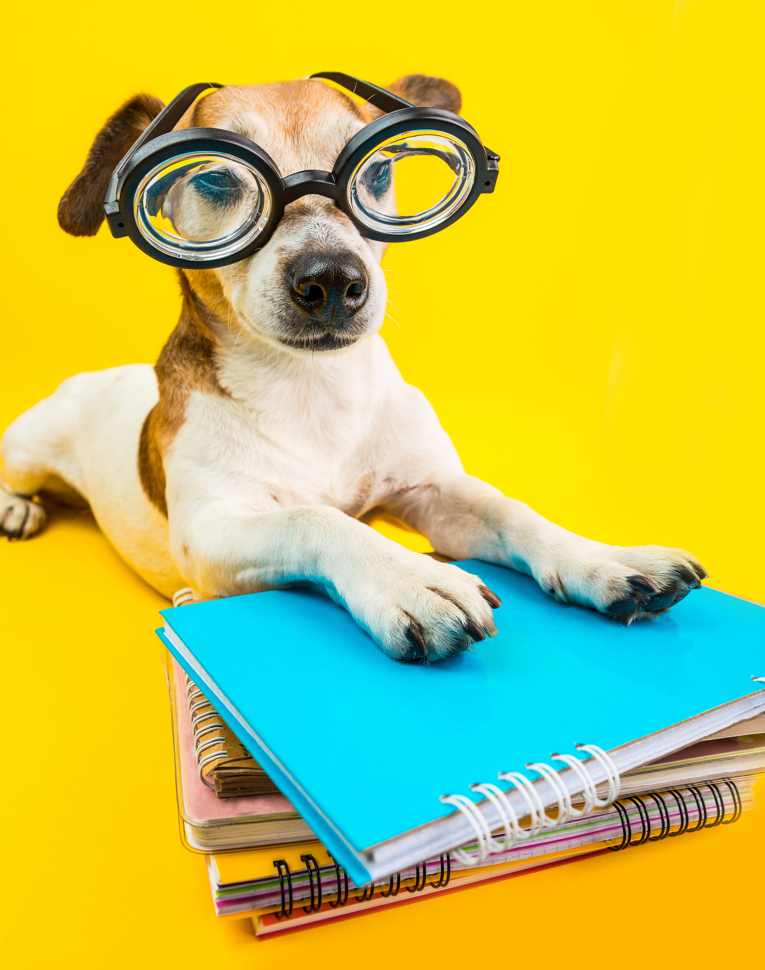 DoggieGlasses.jpg