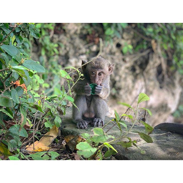 Sprite, the thirst Quencher . . . . . . #willdejessa #williamdejessa #ocularears #wilddop #directorofphotography #dop #cinematography #cinematographer #filmmaking #lensculture #travelphotography #bali #baliindonesia #documentary #documentaryphotography #iphonexs #shotoniphone #monkey #monkeys #tbt #tb