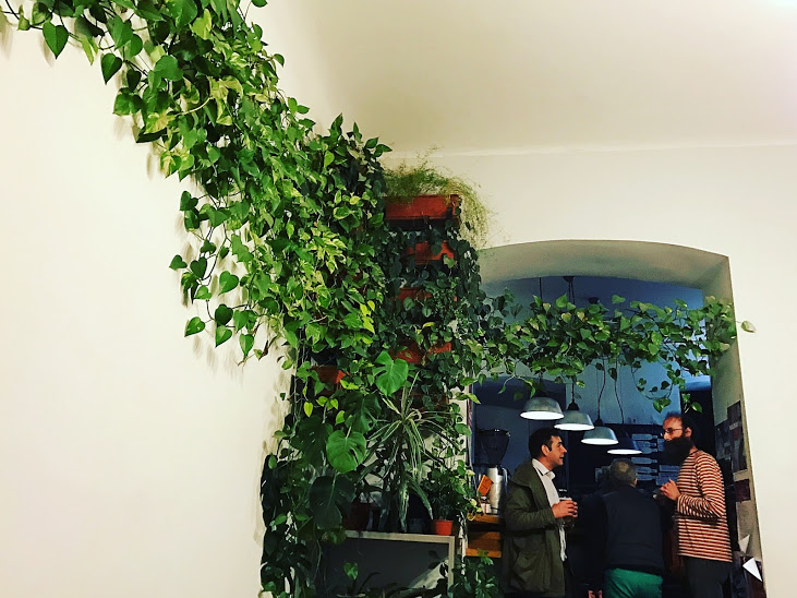 The plant installment inside of the Lumen Cafe!!!
