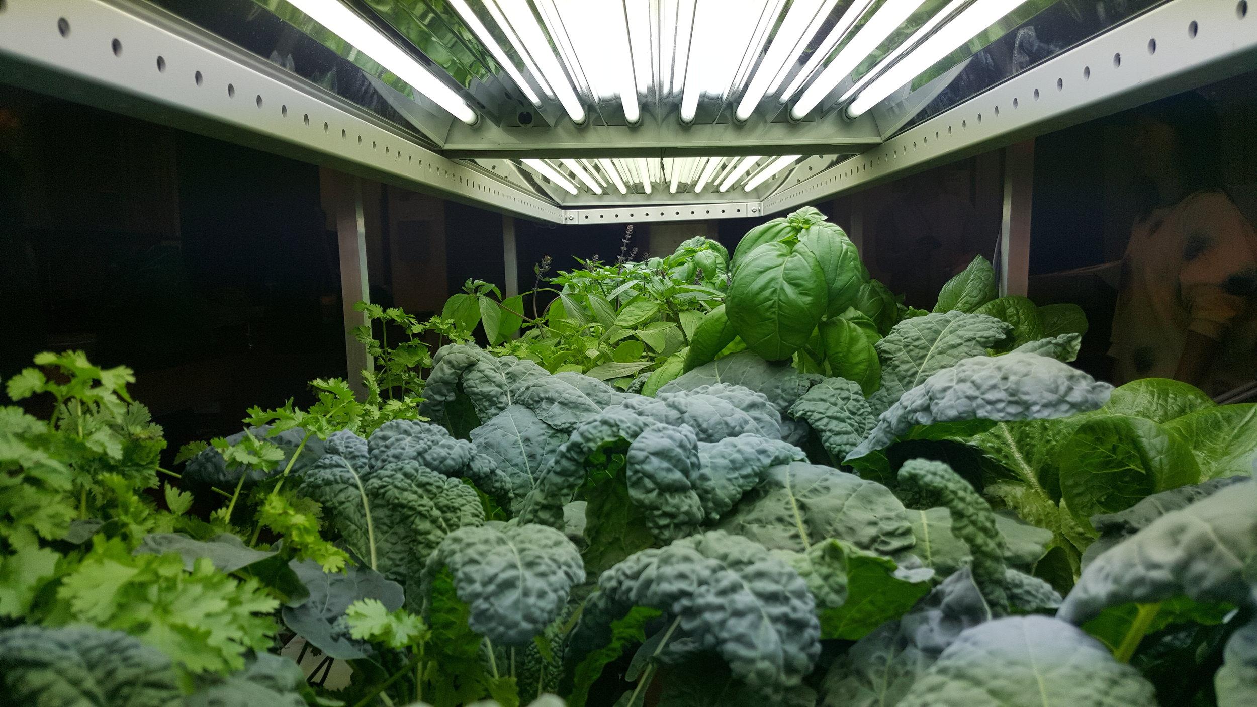 Kale and Greens @ MHSHS.jpg
