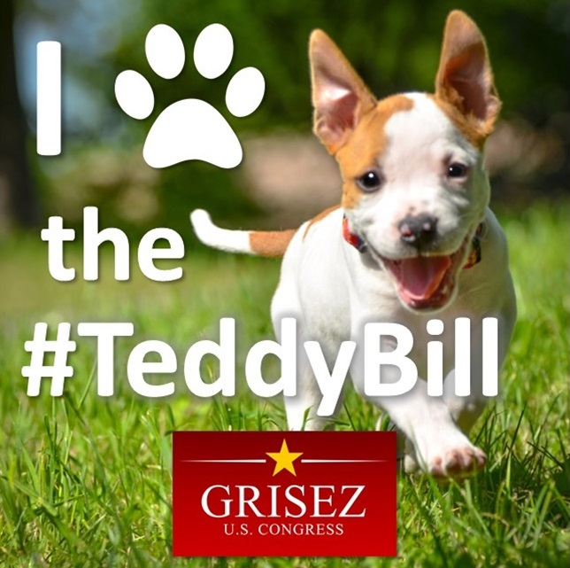 - 1) Make the Teddy Bill a Trend! Set this picture as your profile picture, and use the hashtag #TeddyBill when you talk about animal rights online.2) Contribute!We need to elect Brandon Grisez to Congress so that the Teddy Bill becomes law! Please select an option below to give today. Thank you!