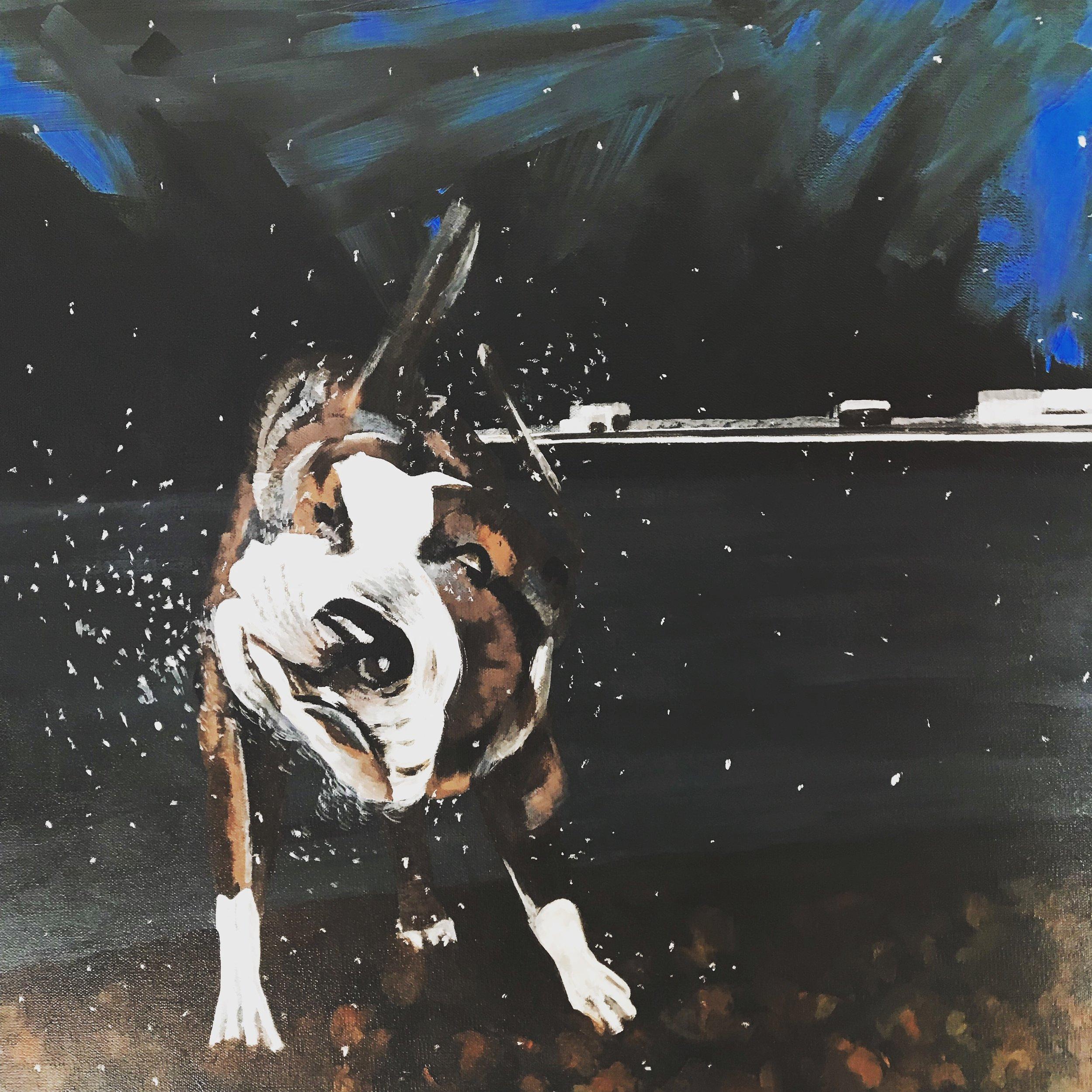 Wet Dog 2017
