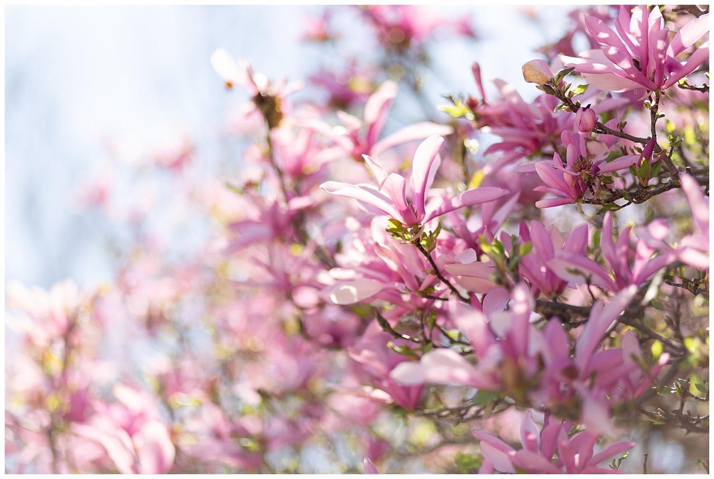 emily-belson-photography-spring-engagement-kim-ben-05.jpg