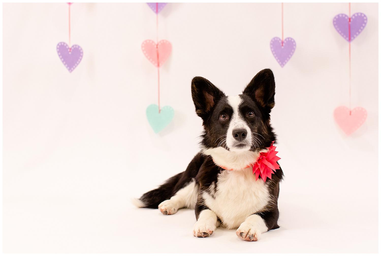 emily-belson-photography-couple-dog-valentine-photoshoot-10.jpg
