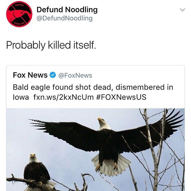 #defundnoodling #eagles #nohopeleft #slime #conservation #wildlife #sad #flyhigh #ibelieveicanfly #rkelly #311