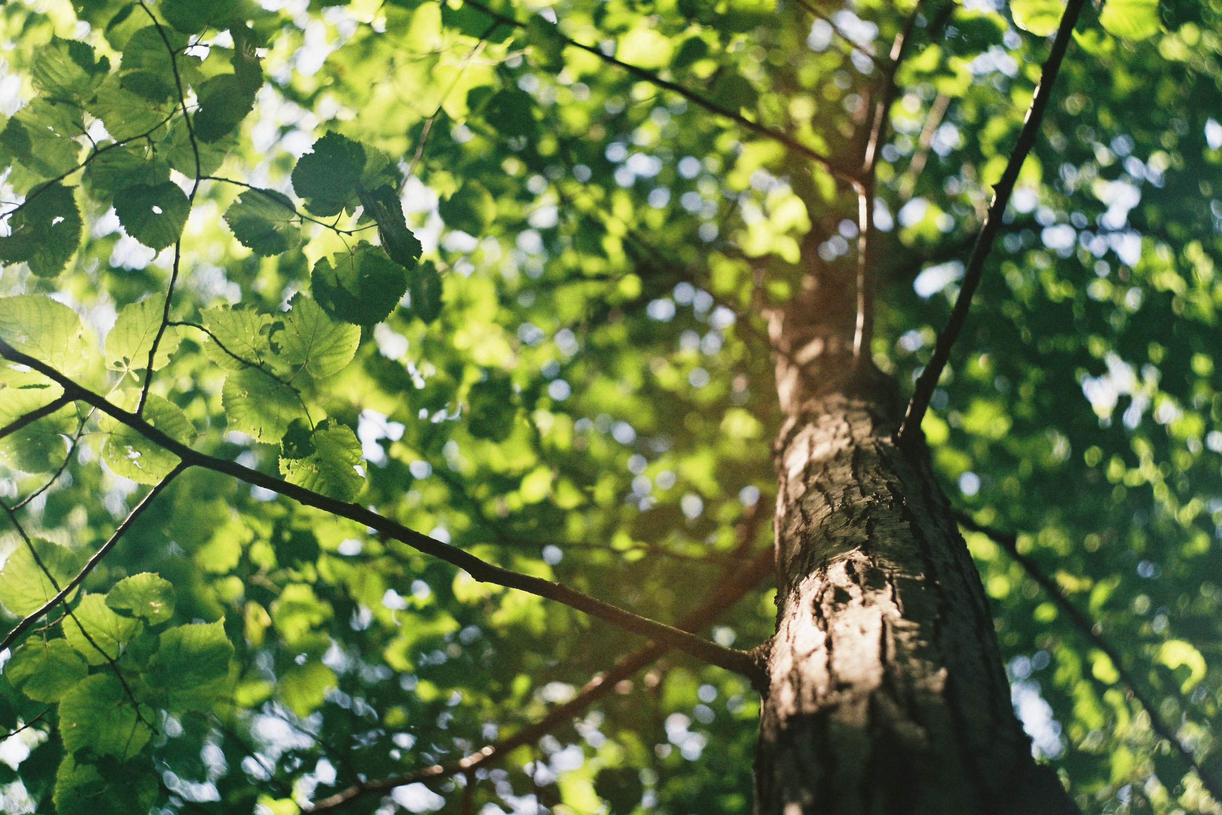 5 Common Tree Diseases in Indiana - What to watch for & how to treat