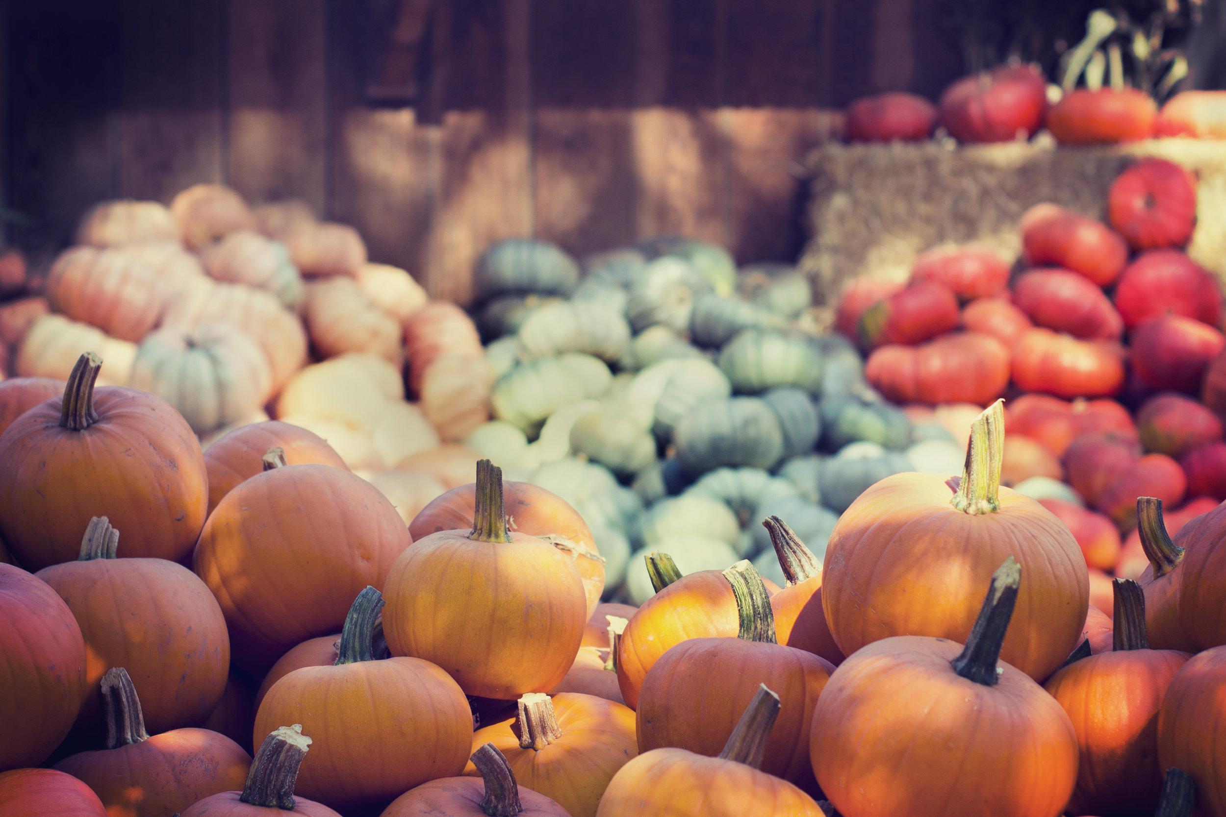 Fall Garden Head Start - Your August To-Do List