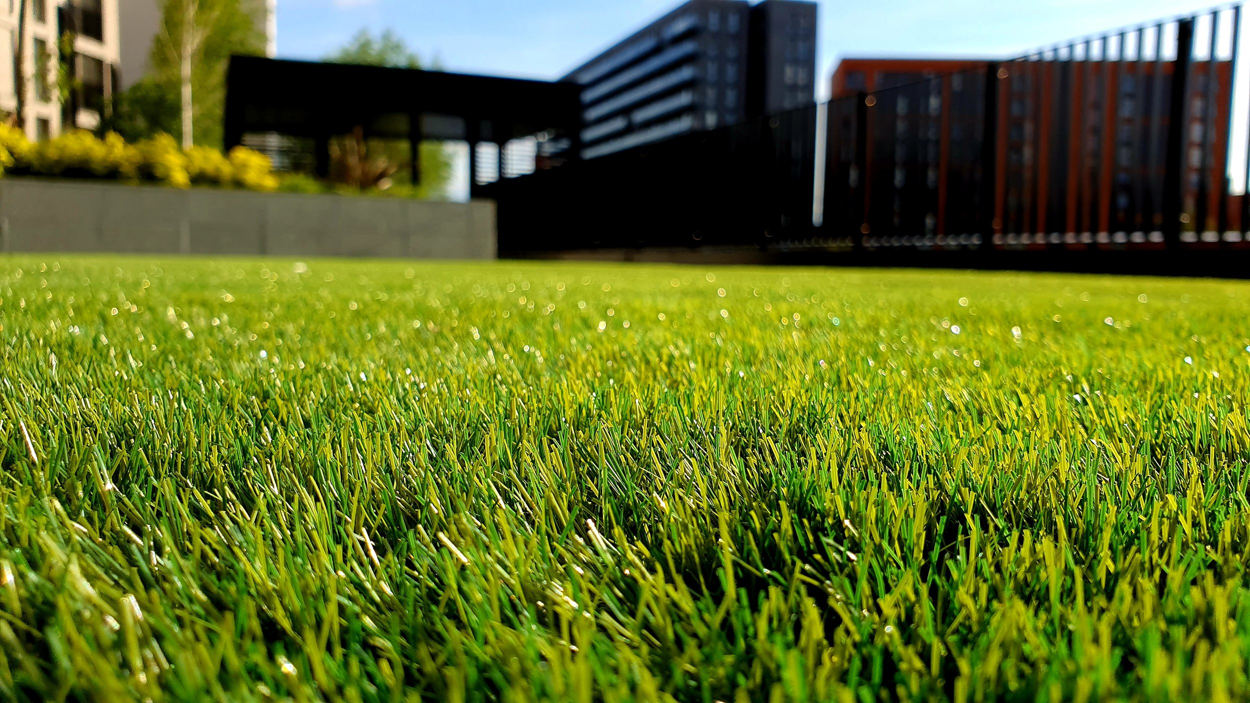 Tips and Techniques for Overseeding Lawns - A post-aeration guide