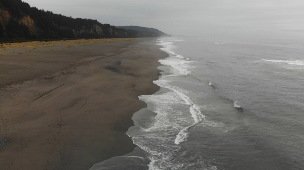 The vibe of this black sand beach, bordering the thicket of the Redwoods, says it all.