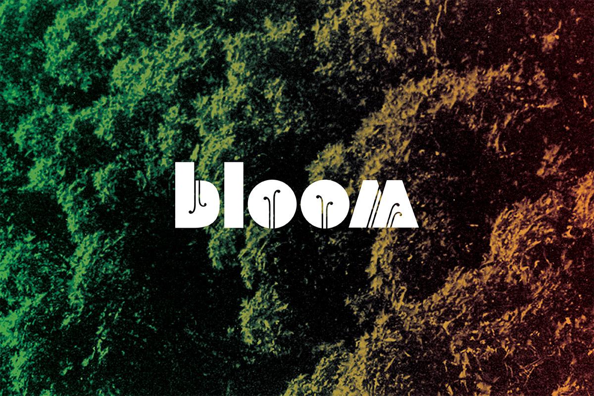 studio-malagon-bloom-festival-01.jpg