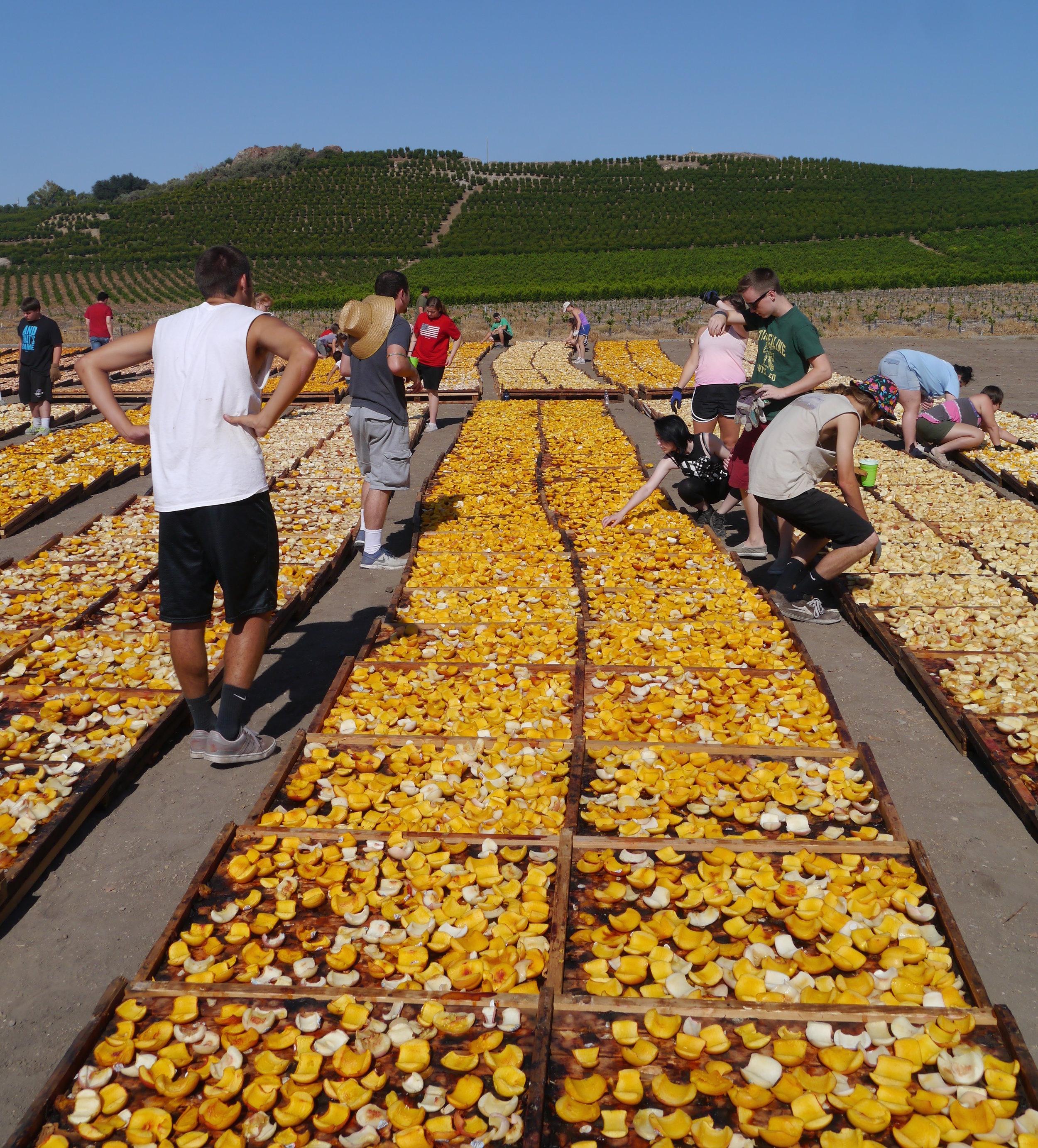 Gleanings _ food.jpg