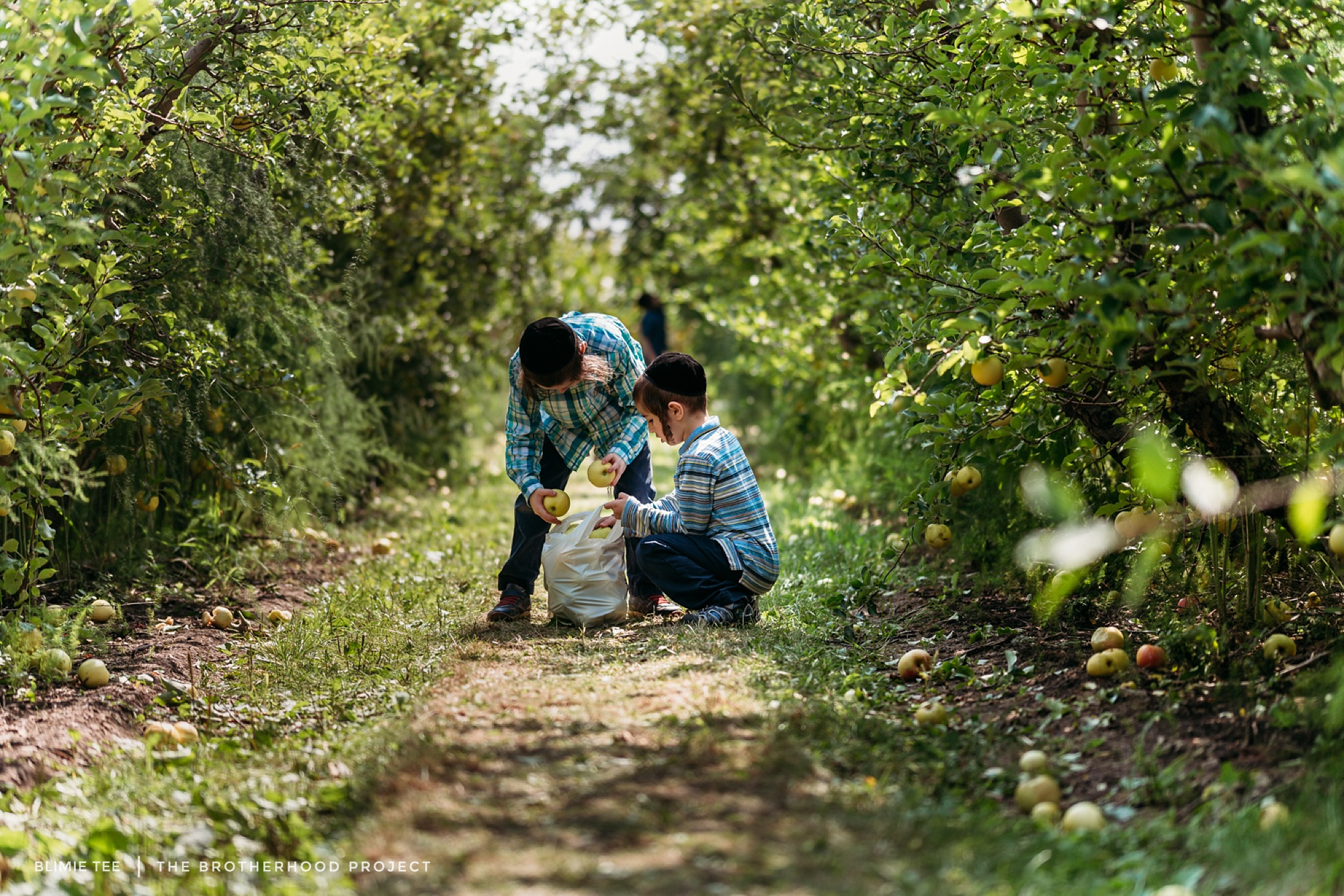 Apple Picking.  You know, you two are such different personalities and most days manage to rub each other the wrong way. Seeing you work cooperatively, helping each other, and enjoying spending time in nature, gives me the little boost of energy I need (until the next one 😊)