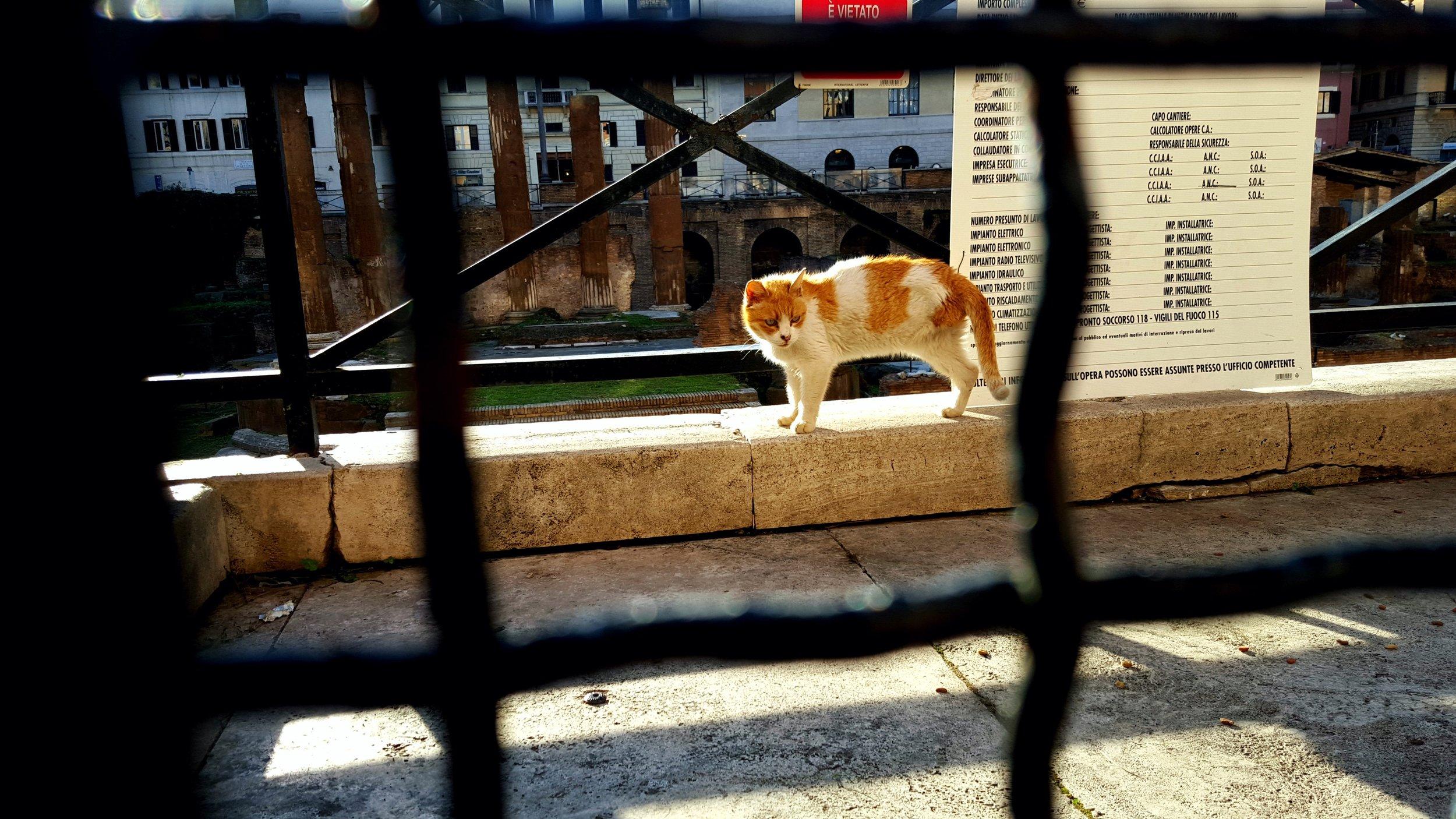 Gato de Tres Patas.jpg