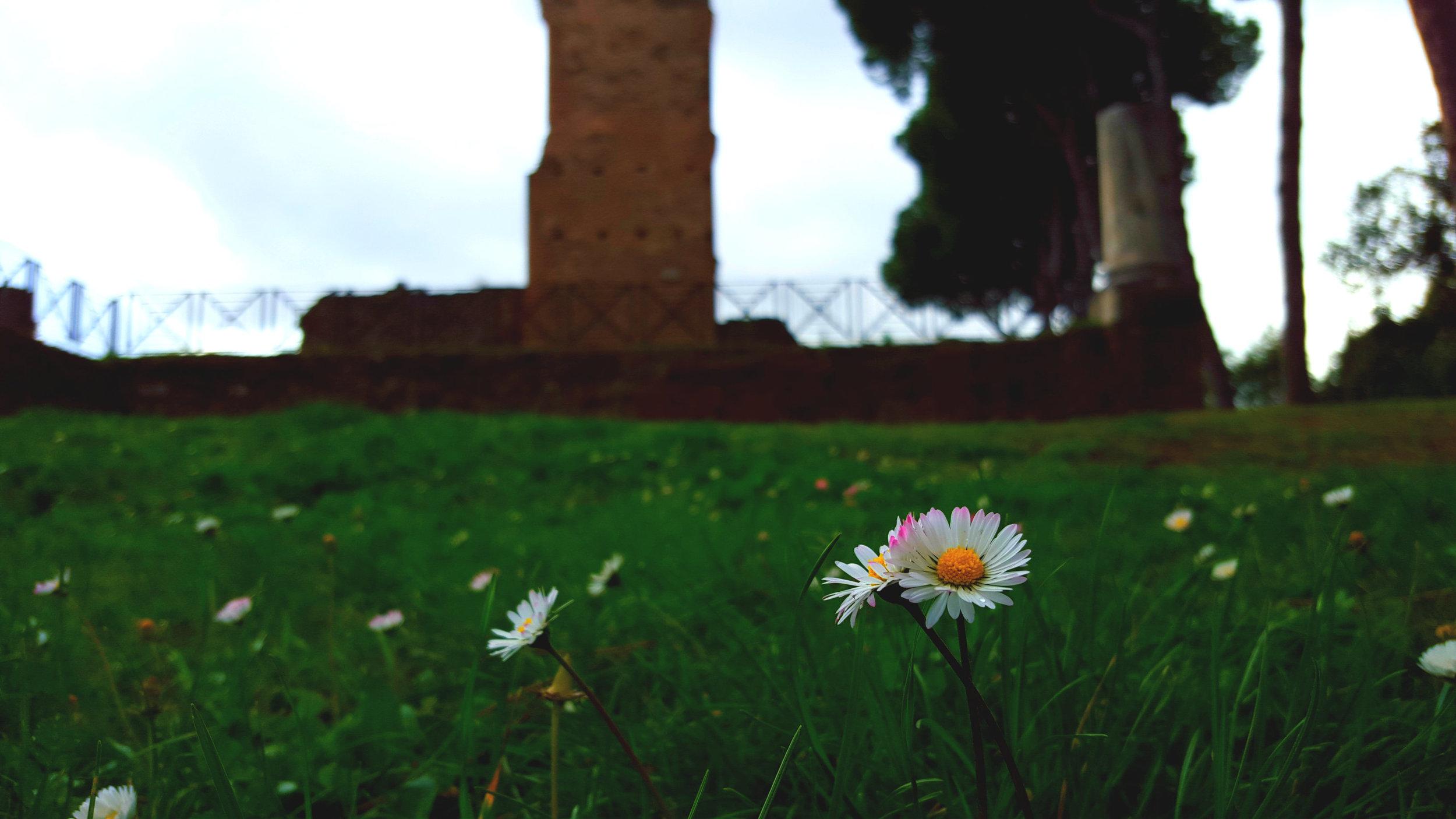 Otra Flor.jpg