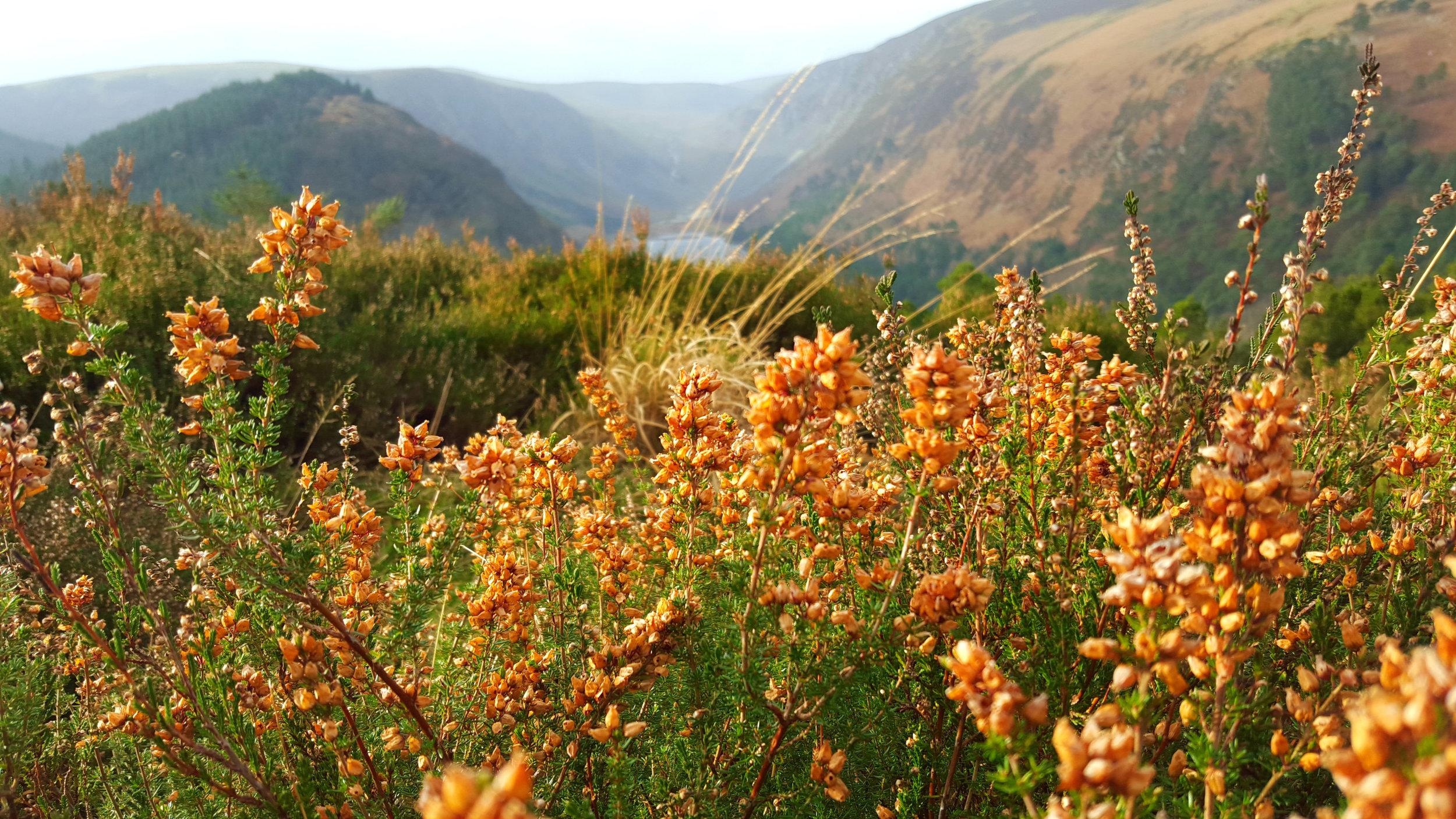 Las Flores Del Invierno.jpg