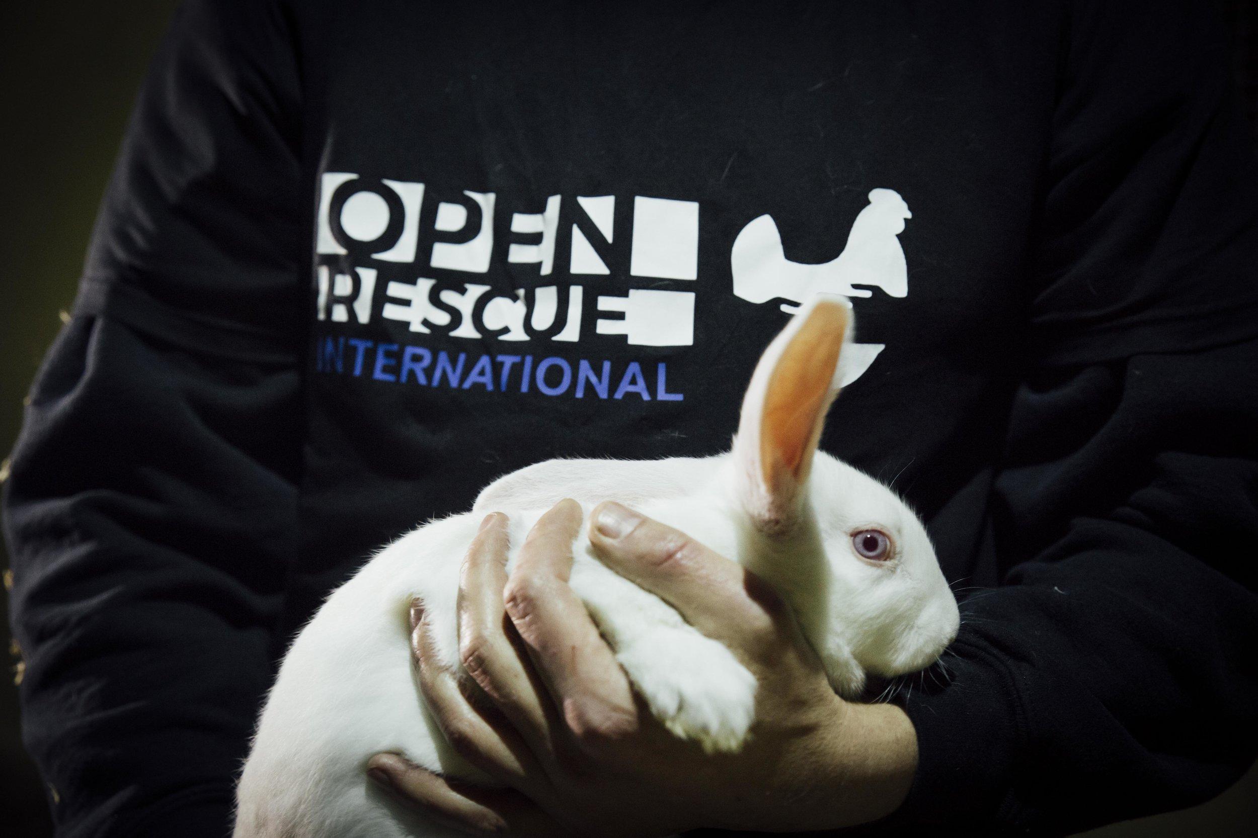 A bunny rescued by Tierretter.de