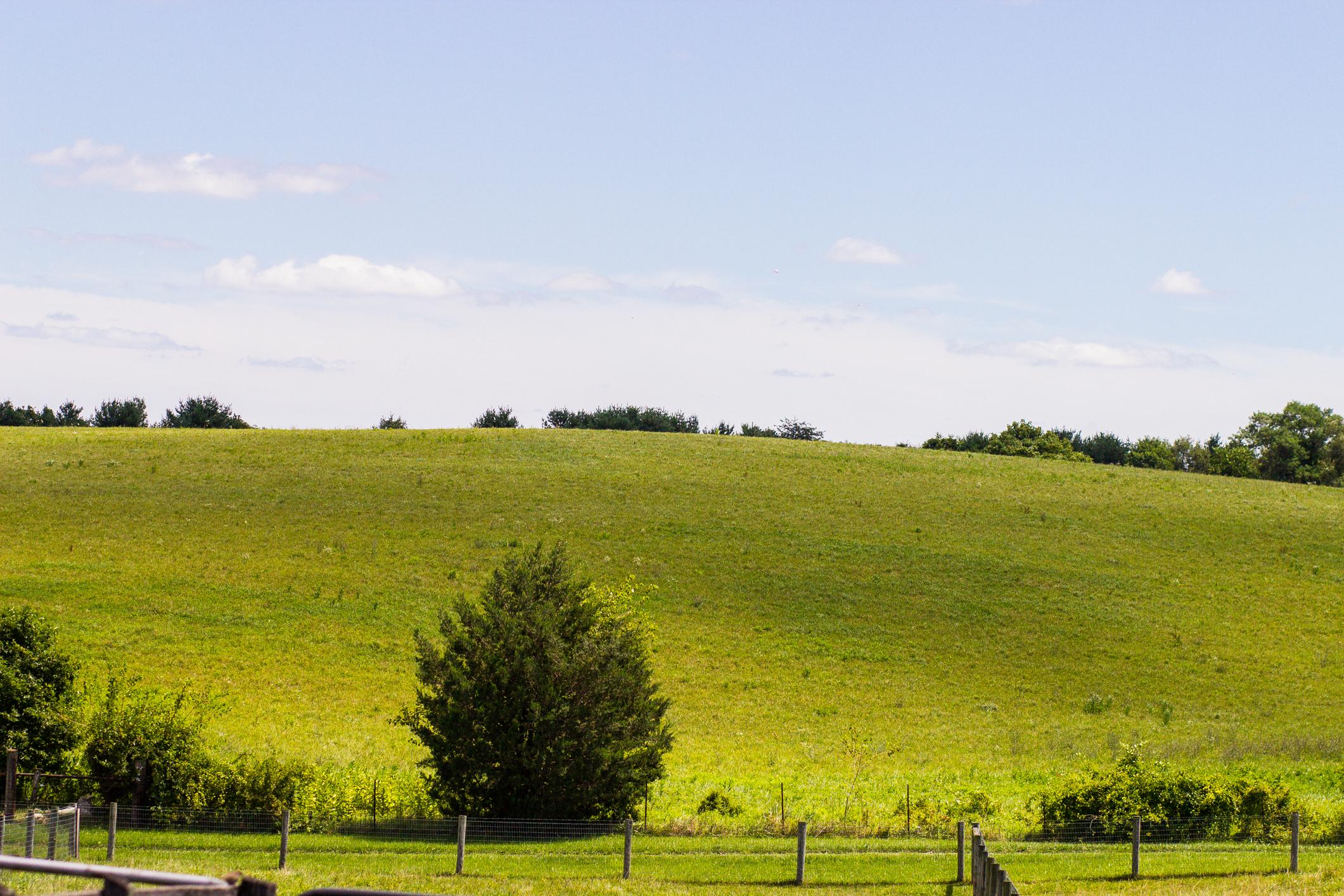 farmfun-8.jpg
